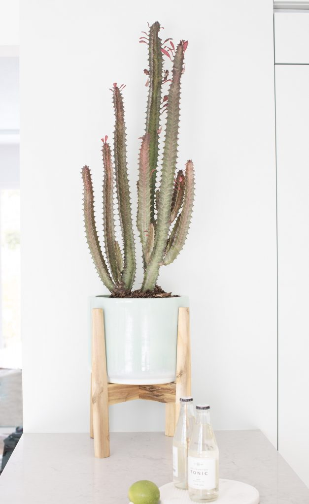 cactus interior design